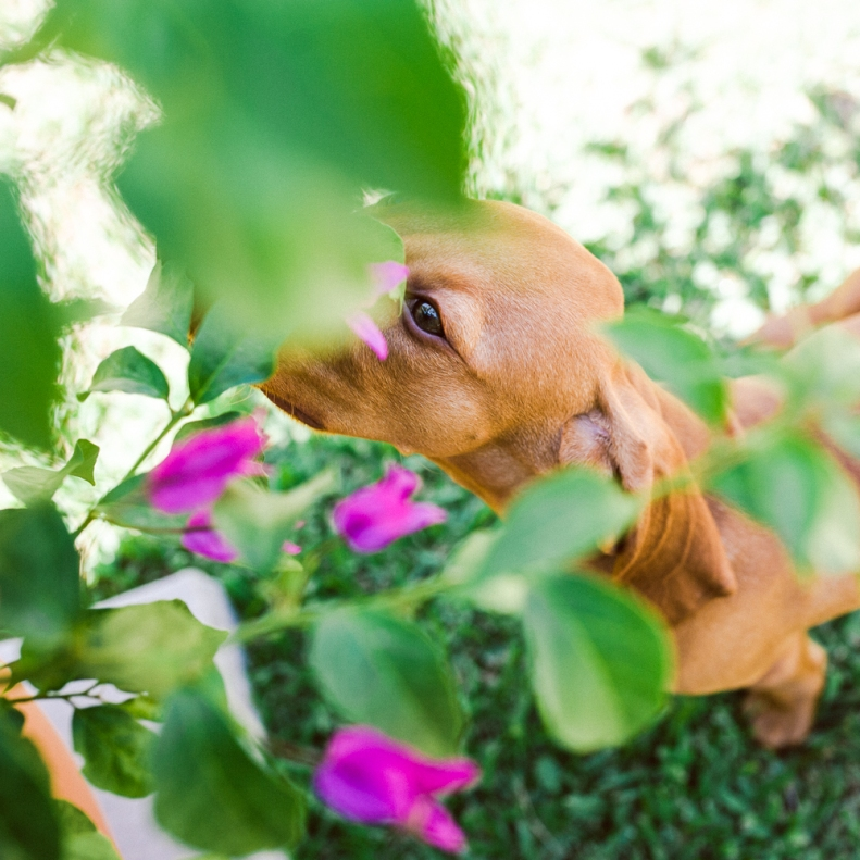 Doggie Days_NatWillHunter_Vivian Lin Photography_01