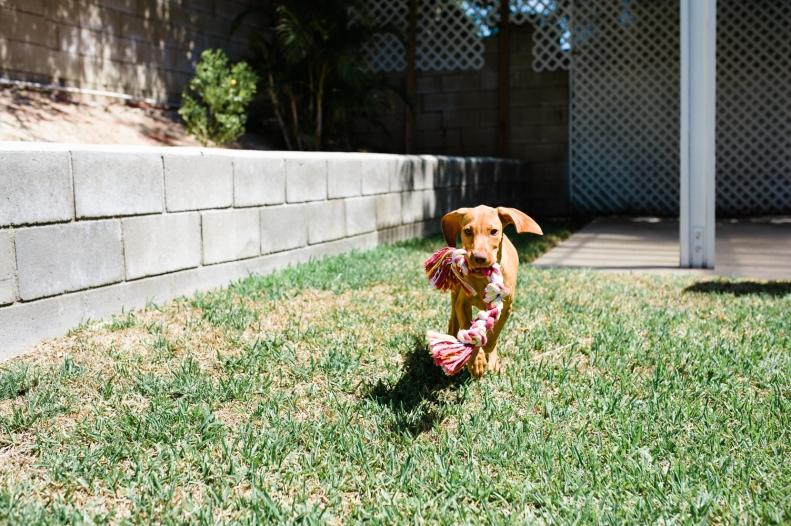 Doggie Days_NatWillHunter_Vivian Lin Photography_02