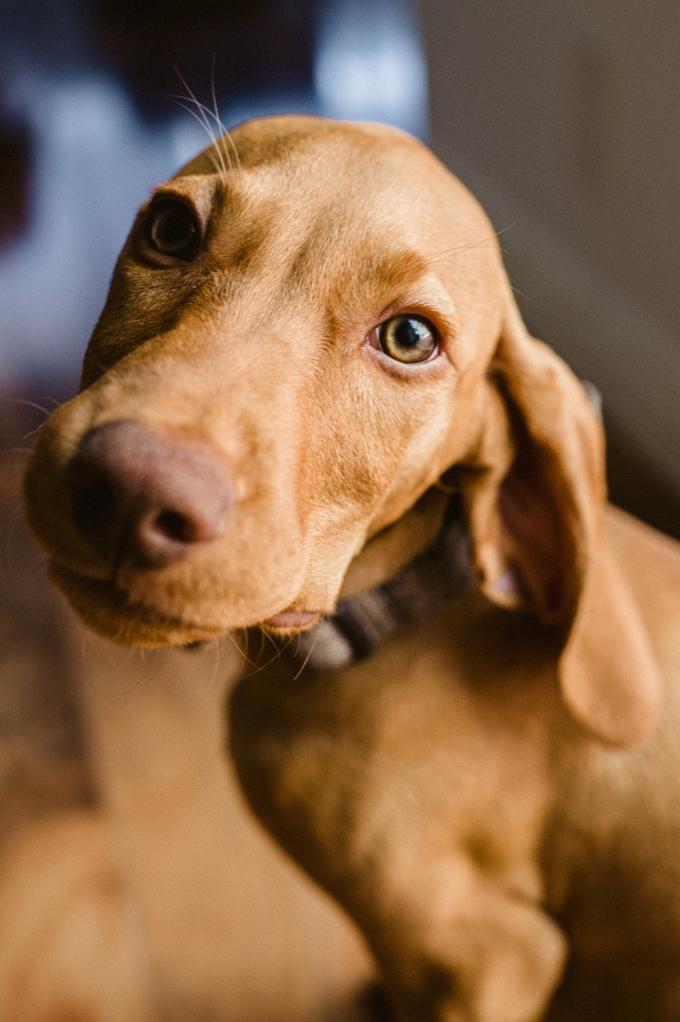 Doggie Days_NatWillHunter_Vivian Lin Photography_07