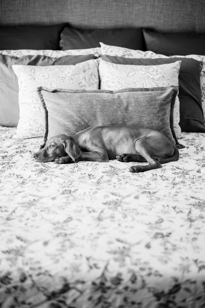 Doggie Days_NatWillHunter_Vivian Lin Photography_09