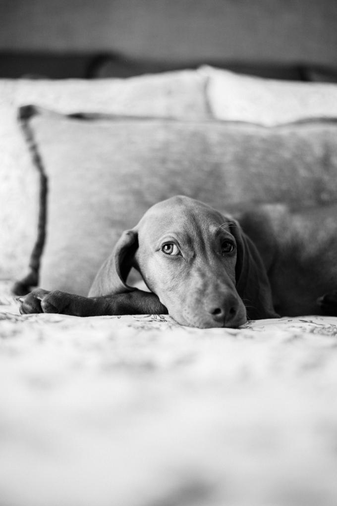 Doggie Days_NatWillHunter_Vivian Lin Photography_10