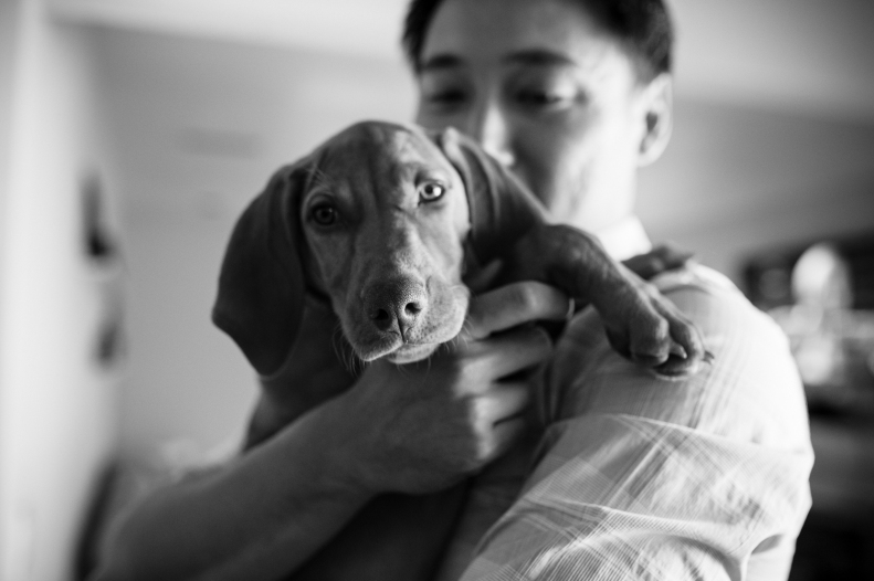 Doggie Days_NatWillHunter_Vivian Lin Photography_12